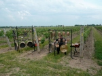 Stratus Vineyard with percussion
