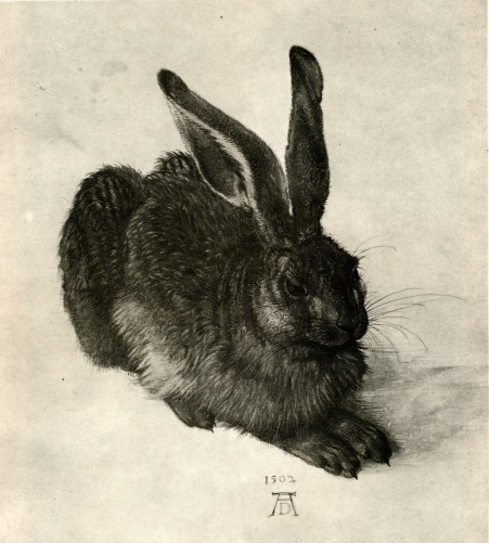 Albrecht Durer, Young hare, 1502, Watercolor