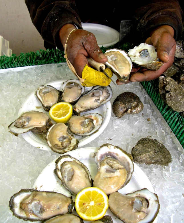 Freshly shucked Chesapeake Bay oysters.